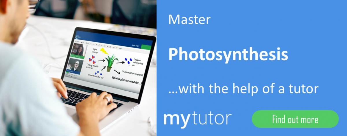 coursework bank photosynthesis More ap bio photosynthesis test bank links course description this quiz is to help my students prepare for their honors biology test on photosynthesis.